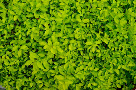 texture of green plant Stock Photo - 12753608