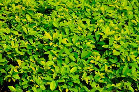 texture of green plant Stock Photo - 12753566