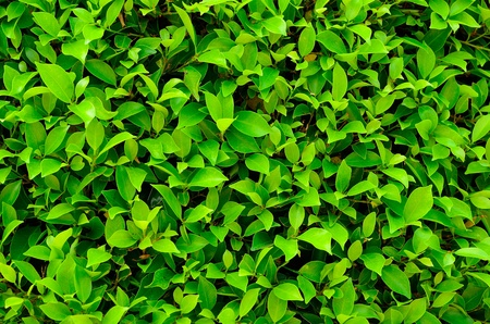 texture of green plant Stock Photo - 12753574