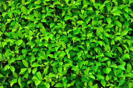 texture of green plant Stock Photo - 12753660