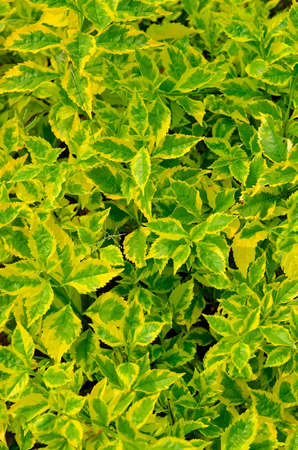 texture of green plant Stock Photo - 12753614