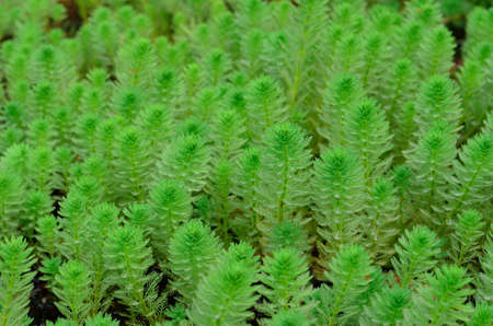 texture of green plant Stock Photo - 12753610