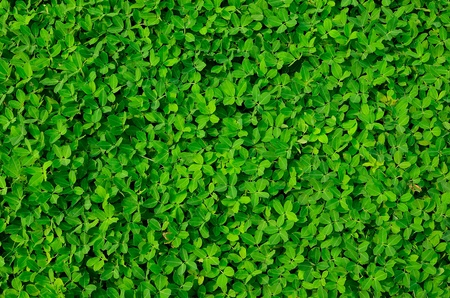 texture of green plant Stock Photo - 12753706