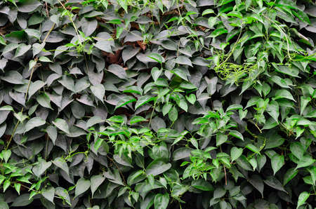 texture of green plant Stock Photo - 12753663