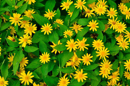 maintained: Green leaves background and yellow flowers