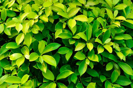 texture of green plant Stock Photo - 12753444