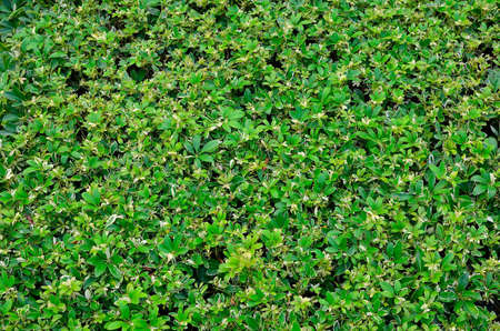 texture of green plant Stock Photo - 12753752