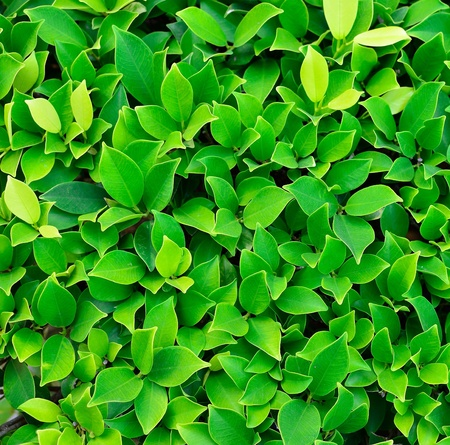 texture of green plant photo