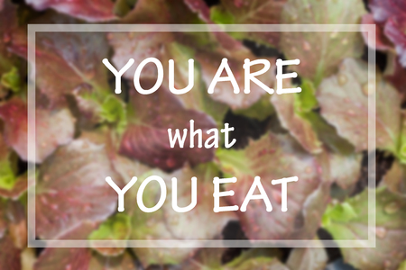 what to eat: You are what you eat in spirational quote on vegetable background
