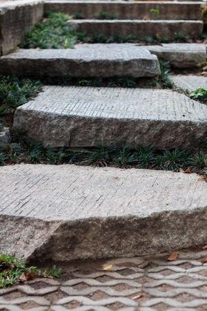 The step path in the garden, stock photo