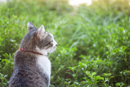 Thai cat chill in garden home Standard-Bild