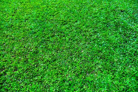 Idyllic seamless grass texture green.