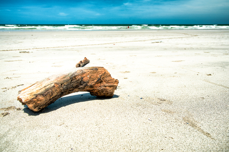 Timber on the nice beach with blue sky Stock Photo