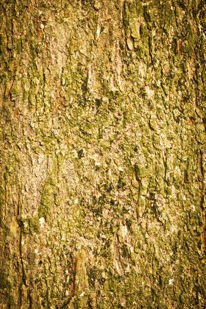Tree Bark  Detailed Texture effect  Stock Photo - 12826709