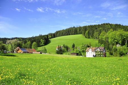 green field in triburg, Germany