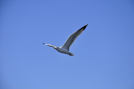 A seagull in Marseille, france Stock Photo