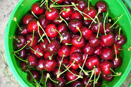 a bucket full of red cherries