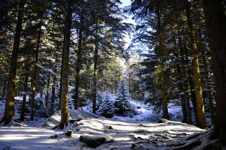 Forrest on the mountain in Bergen, Norway Stock Photo