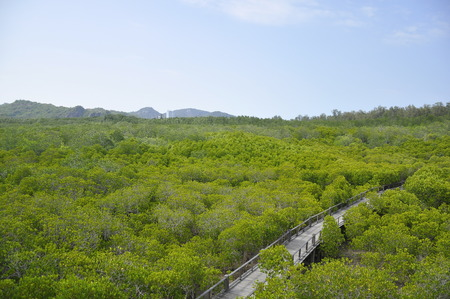 Mangrove forest in Hua Hin, Thailand Stock Photo