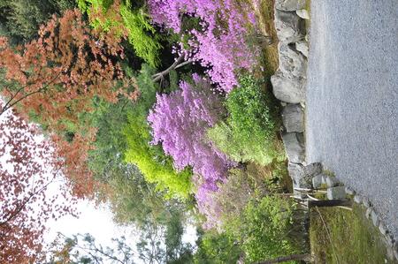 Colourful Japanese garden, Kyoto