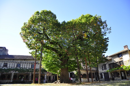 a heart-shaped tree in a village, Perouges