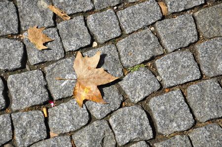a leaf on the stone street, Lyon