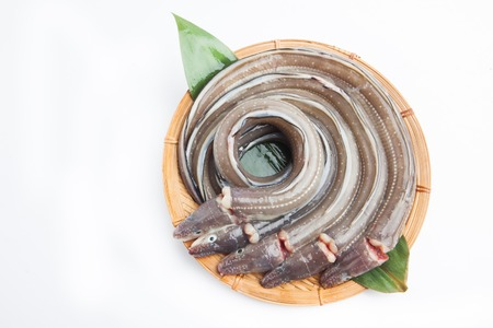 Fresh Japanese eel on white background Stock Photo