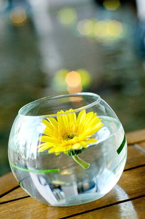 sunflower in bowl glass