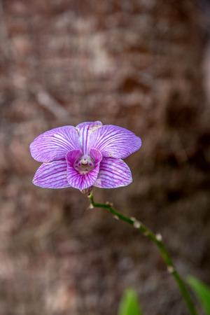 Violet blossom orchid in garden