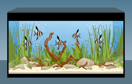 Home natural aquarium with fish and plants