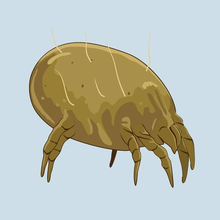 rhinitis: House dust mite - microscopic bugs Illustration