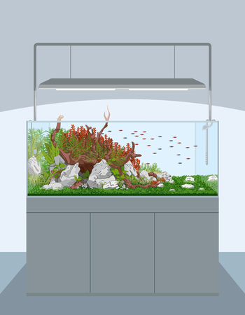 plant stand: Natural home aquarium with fish and plants on cabinet - aquascape. Vector illustration Illustration
