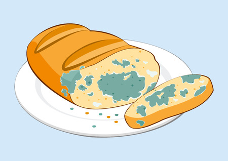 Mold food. Mold bread on plate. Vector illustration