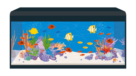 fishtank: Marine reef saltwater aquarium with fish and corals. Vector illustration Illustration