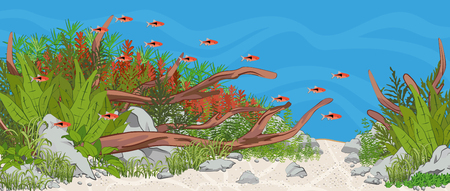 Natural home planted aquarium with fish and plants. Natural underwater bottom scene with stones, woods and plants. Aquascape setup. Vector illustration