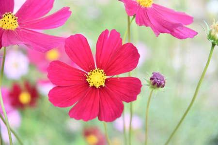 carpel: pink flowers