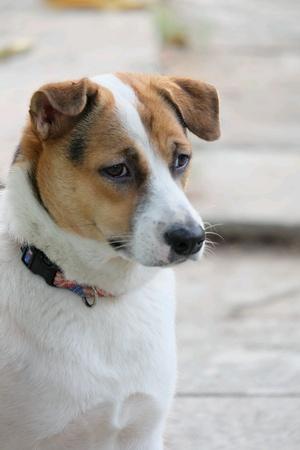 hope: Dog