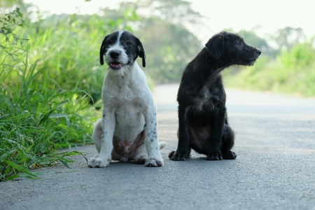 philanthropist: Two dogs waiting for food from philanthropist.