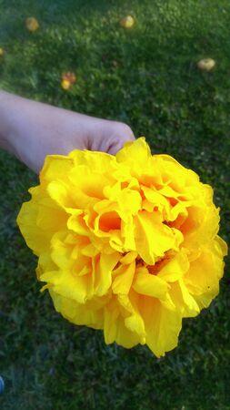 bright: Yellow flower. Stock Photo