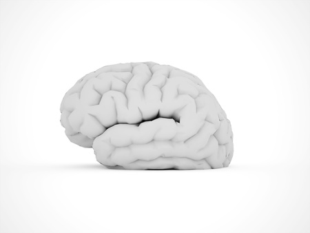 Brain isolated on white background