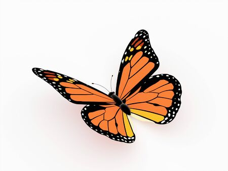 Butterfly orange isolated on white photo