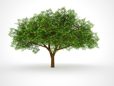 leafy: ISOLATED LEAFY TREE on white background