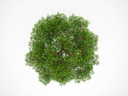 huge tree: Tree from above isolated on white background