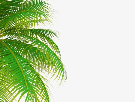 Palm tree leaf on white background Zdjęcie Seryjne