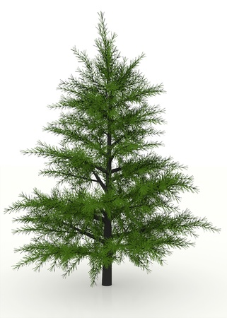 nus: Pine tree rendered and isolated on white