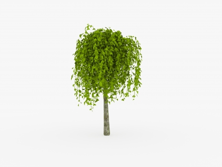 Small tree rendered and isolated on white background