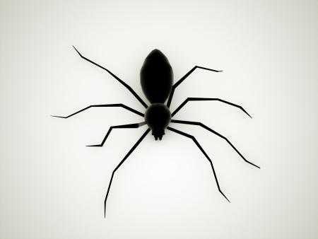 latrodectus: Spider black rendered big