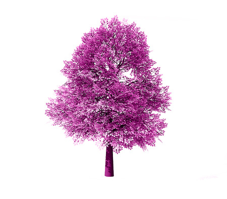 Deciduous tree rendered isolated on white background
