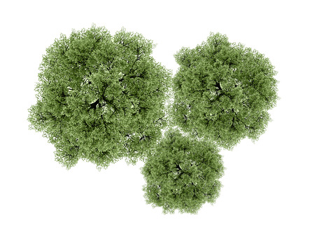 view: Trees rendered isolated on white background Stock Photo
