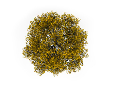 Tree on top in yellow color isolated on white background Stock Photo